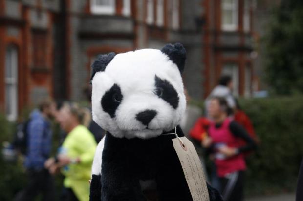 Panda in Reading