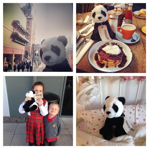 Panda Montage 1